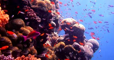 Picture of Help Mary Save Coral