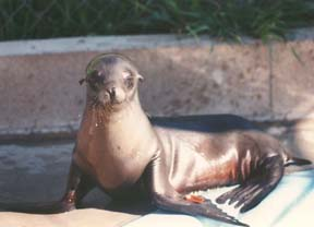 Picture of Friends of the Sea Lion