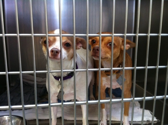 These two dogs have to be adopted together