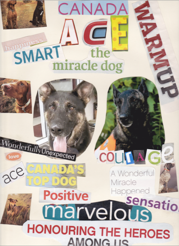 Picture of Ace the Miracle Dog