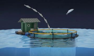 Picture of Ending Overfishing