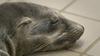 Picture of Pacific Marine Mammal Center Unusual Mortality Rate Crisis Response