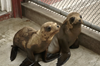 Picture of Pacific Marine Mammal Center Call to Action