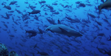 Picture of Racing Extinction [Trailer]