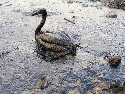 Picture of Earthkeeper Hero: Equipo de Limpieza del Derrame de Petróleo en el Golfo de México