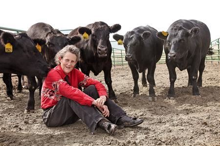 Temple Grandin being with the animals she loves