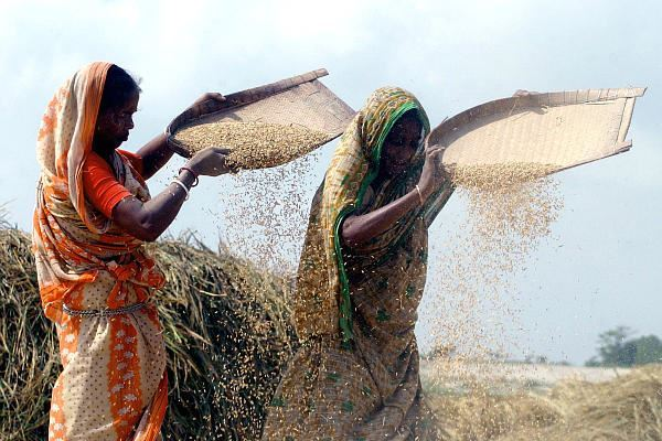 Bangladeshi women free dust from rice in the wind at their Dhammrai village 25 miles from the capital Dhaka. March 8 is International Women's Day, celebrating the achievements of women and highlighting the challenges they face.
