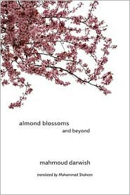 Picture of Almond Blossoms and Beyond