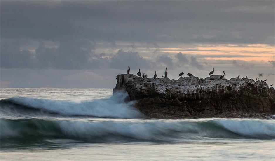 Picture of Birds at Dusk by David Hansen, Laguna Bluebelt