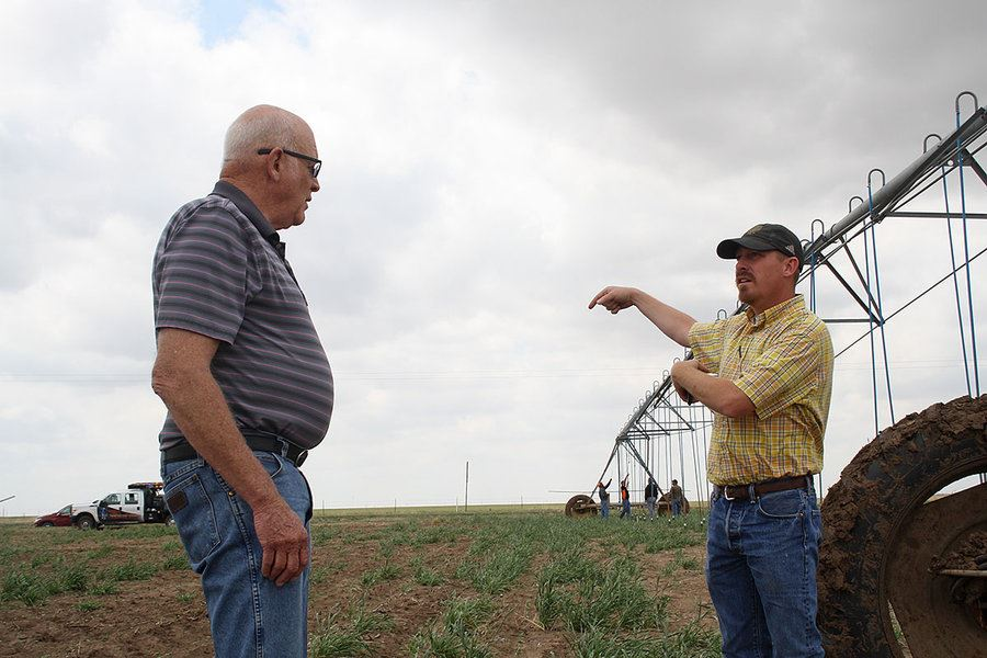 Picture of Amid drought in Texas Panhandle, farmers scratch crops from dust