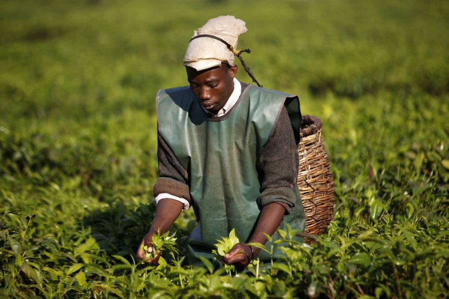 Picture of In Rwanda, agricultural reforms boost food security and slash poverty