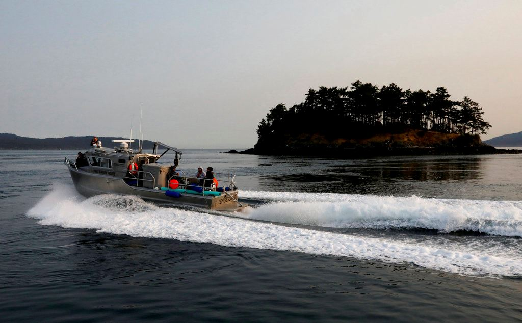 Picture of Teams trying to save ailing orca practice feeding live fish