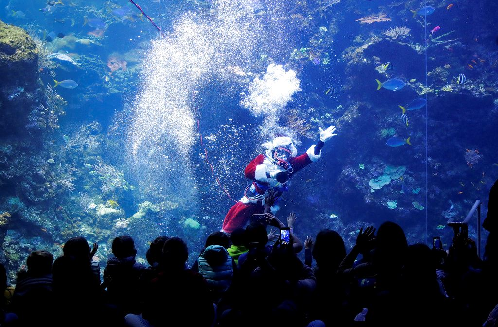 Picture of Scuba-diving Santa brings holiday cheer to fish, museumgoers
