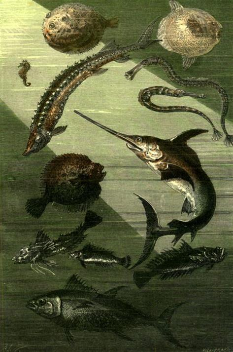 Picture of Illustration from Jules Verne's 20,000 Leagues Under the Sea