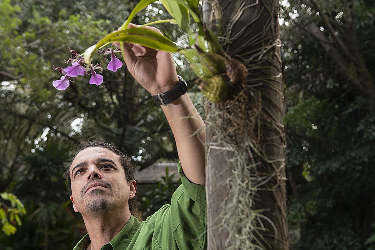 Picture of The orchid whisperers: Rare blooms find an urban perch