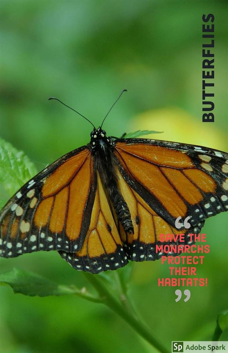 Picture of Butterflies are free by Wendy