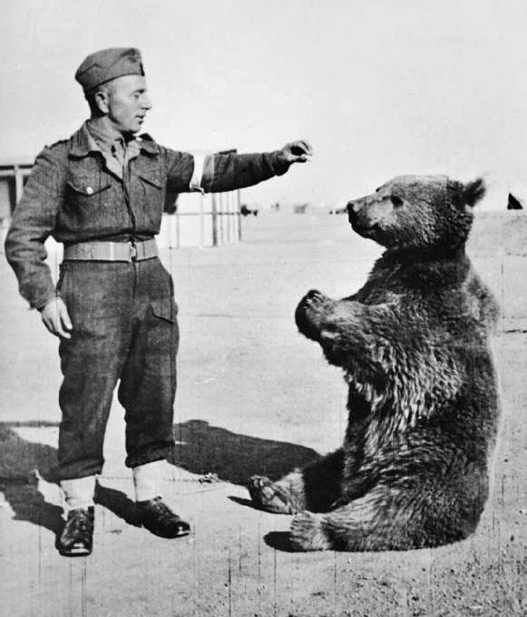 Picture of Wojtek the bear