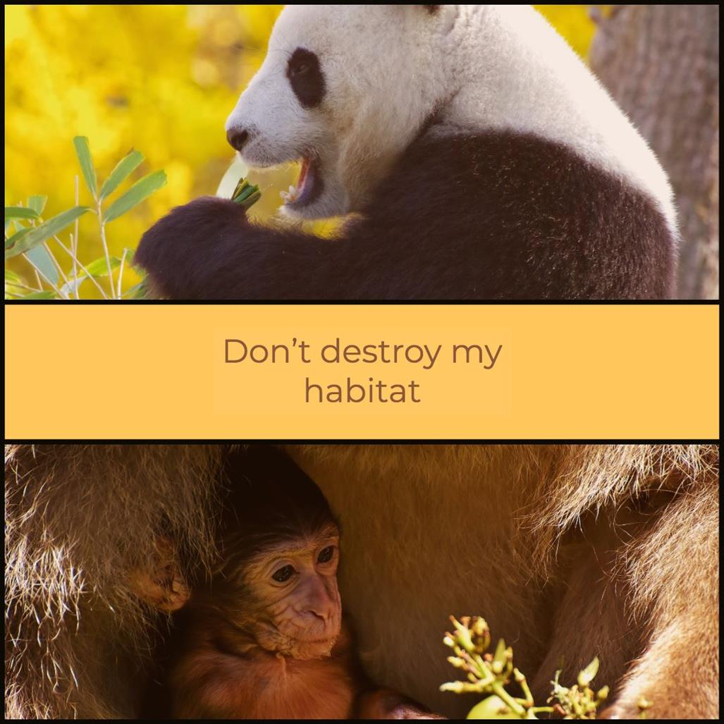 Picture of Don't Destroy my Habitat