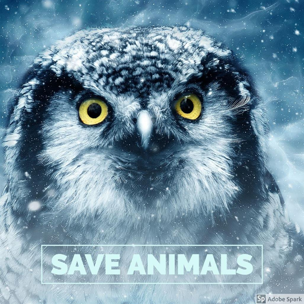 Picture of Save Animals by Luke from Santa  Cruz, California