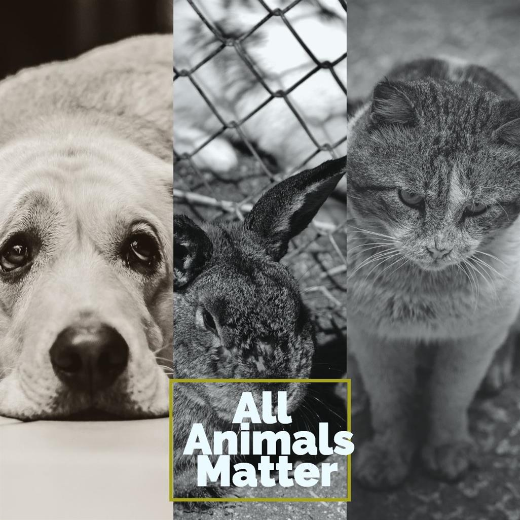 Picture of Animals Have Rights Too