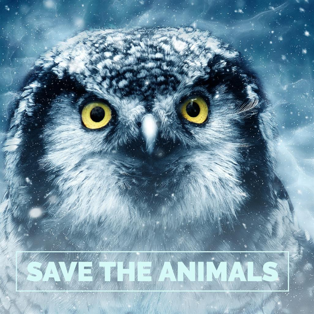 Picture of Save Animals