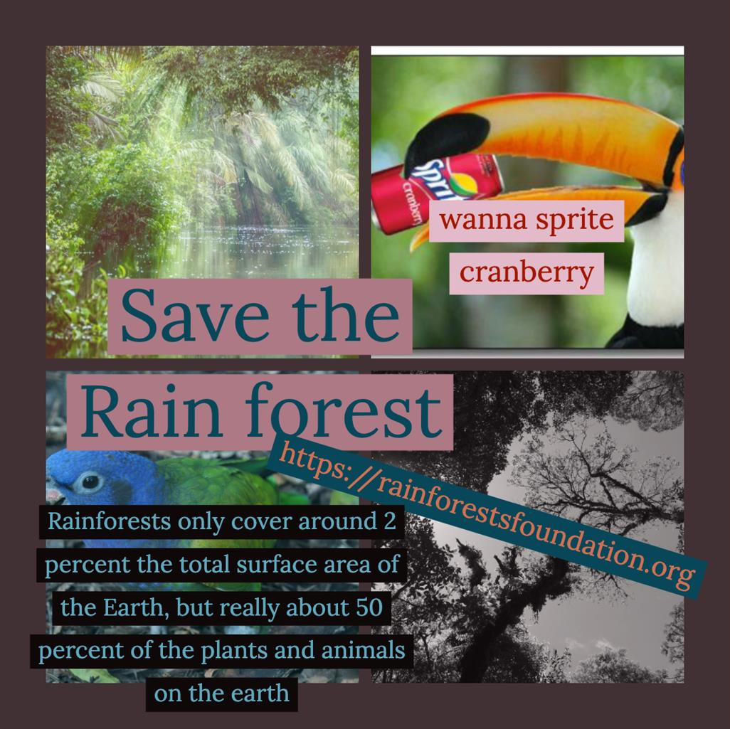 Picture of save the rainforests and the palm oil