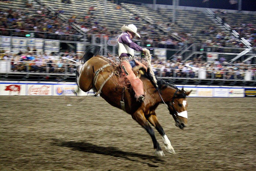Picture of The 'original extreme sport': For cowboys, Christmas comes in July