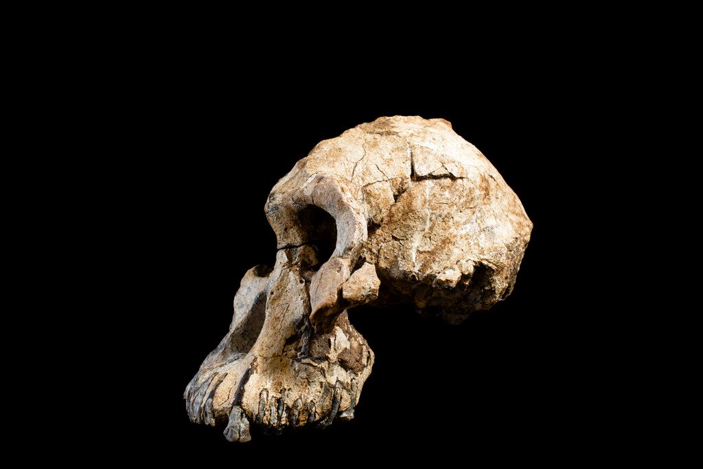 Picture of Ethiopian fossil reveals face for ancestor of famed 'Lucy'
