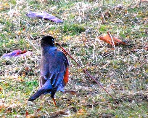 bird photo - by Madeline Shields