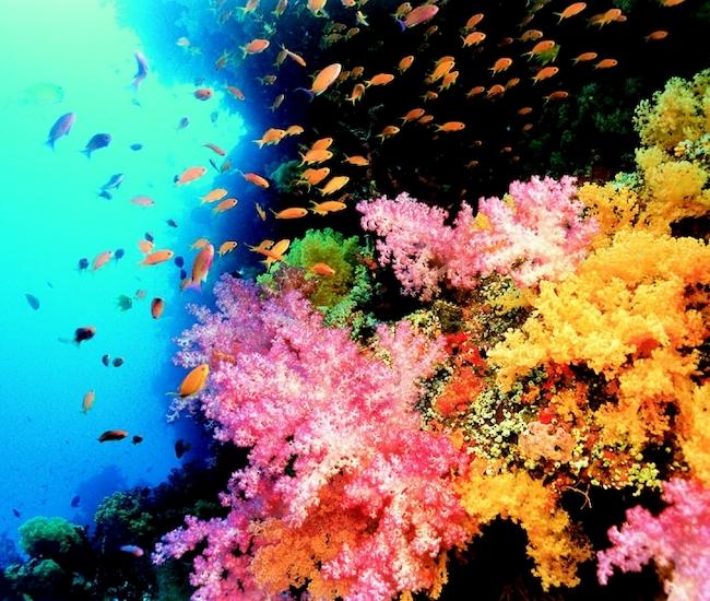 Coral Reef Adventure (MacGillivray Freeman Films)
