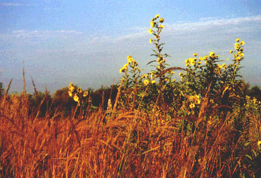 <b><a href=http://www.landinstitute.org/vnews/display.v?TARGET=showImage&article_id=380395a53&image_num=1>A Prairie:</a> A self-sustaining natural ecosystem</b>