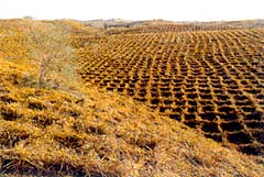 <h5>The area of desertification, which is 2.62 million sq km, or about 27 percent of China's land territory, has far exceeded the nation's total of farmland. Today, desertification is expanding at a rate of 2,460 sq km every year. (<i>China Through a Lens</i>)<p></h5>