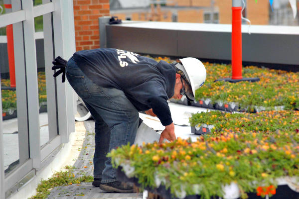 A worker helps to install a green roof with a blanket of sedum plants at Union Station in Normal, Ill. A dedication of the new facility is planned for July 14. In Nairobi, Kenya, the Coca Cola building and others are using green roofs to cool buildings and cut energy costs. <P>Steve Smedley/AP/The Pantagraph