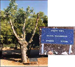 Honoring Raoul Wallenberg at Yad-Vashem in Israel.
