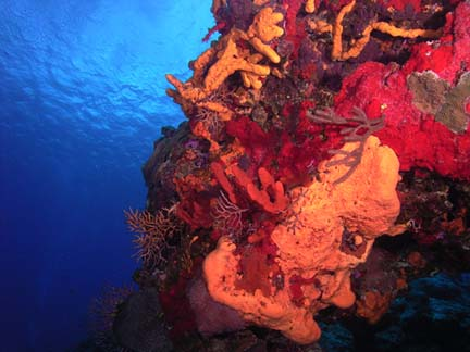 Coral Reef in Cozumel<br>Photo courtesy of Jim Dean