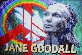 Jane goodall my hero for Art miles mural project