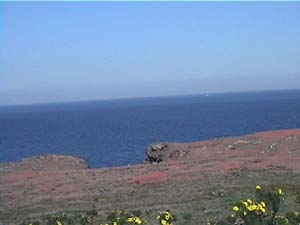 <center>Iceplant on Anacapa Island</center>