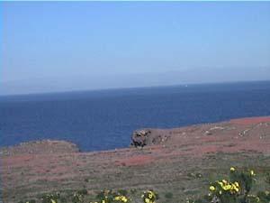 <center>Iceplant on Anacapa Island</center>