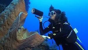 Cristina Diaz, exploring the world of sponges