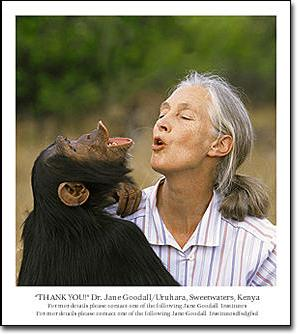 The My Hero Project - Jane Goodall