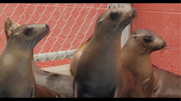 <i>Pacific Marine Mammal Center</i>