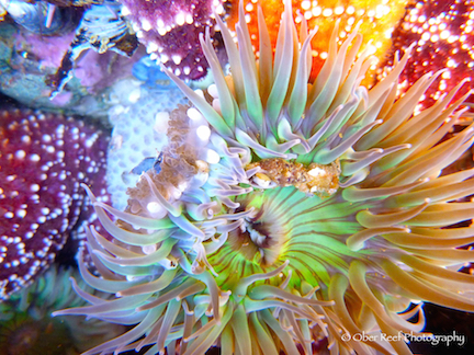 Photo of undersea life by Patsee Ober