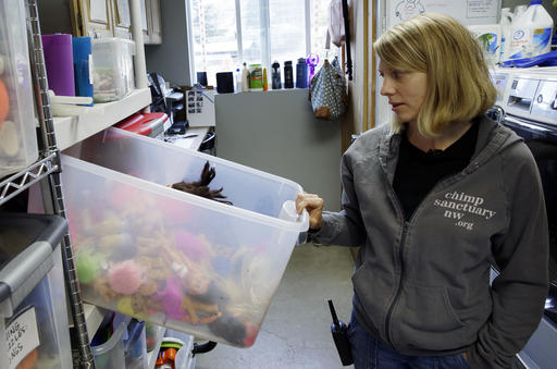 In this photo taken Aug. 8, 2016, Diana Goodrich, co-director of Chimpanzee Sanctuary Northwest, looks into a box of dolls and other toys used in enrichment activities with the chimps who live in the facility near Cle Elum, Wash. Sanctuaries around the country are preparing for an influx of retired private lab chimps now that the federal government has stopped backing experiments on humankind's closest relatives. (AP Photo/Ted S. Warren)