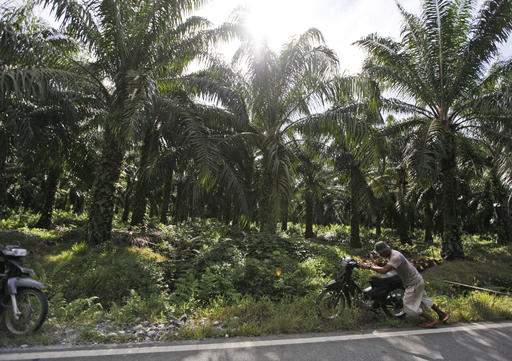 In this Saturday, Sept. 29, 2012 photo, a man pushes his motorbike at a palm oil plantation in Nagan Raya, Aceh province, Indonesia. Indonesia has strengthened its moratorium on converting peat swamps to plantations in a move a conservation research group says would prevent annual fires and substantially cut the country's carbon emissions if properly implemented. (AP Photo/Dita Alangkara)