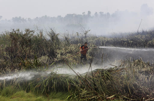 In this Thursday, Sept. 17, 2015 file photo a fireman sprays water to extinguish forest fire at a peatland field in Ogan Ilir, South Sumatra, Indonesia. Indonesia has strengthened its moratorium on converting peat swamps to plantations in a move a conservation research group says would prevent annual fires and substantially cut the country's carbon emissions if properly implemented. (AP Photo/Tatan Syuflana, File)