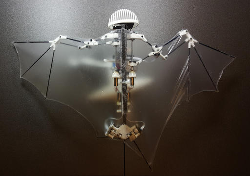 This photo provided by Alireza Ramezani, University of Illinois, shows a Bat Bot, a three-ounce flying robot that they say can be more agile at getting into treacherous places than standard drones. Because it mimics the unique and more flexible way bats fly, this new robot prototype can do a better and safer job getting into disaster sites and scoping out construction zones than those bulky drones with spinning rotors, said the three authors of a study released Wednesday, Feb. 1, 2017, in the journal Science Robotics. (Alireza Ramezani/University of Illinois via AP)