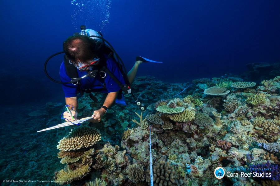 Scientist Andrew Baird surveys healthy reefs off the coast of Australia between Mackay and Townsville in October 2016. (Tane Sinclair-Taylor/ARC Centre of Excellence for Coral Reef Studies)