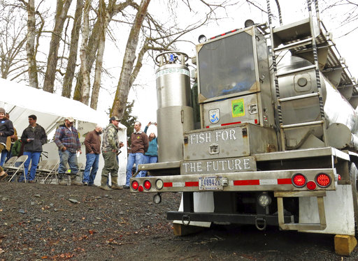 In this Thursday, March 9, 2017 photo, a water tanker truck holding hundreds of baby coho salmon arrives at the Lostine River in Wallowa County, Ore., after a 300-mile journey from a hatchery, and prepares to release the fish into the water as a crowd looks on. The Nez Perce tribe and the Oregon Department of Fish and Wildlife worked together to restore 500,000 juvenile coho salmon to the Snake River Basin in northeastern Oregon, where they haven't been seen for more than 30 years. (AP Photo/Gillian Flaccus)
