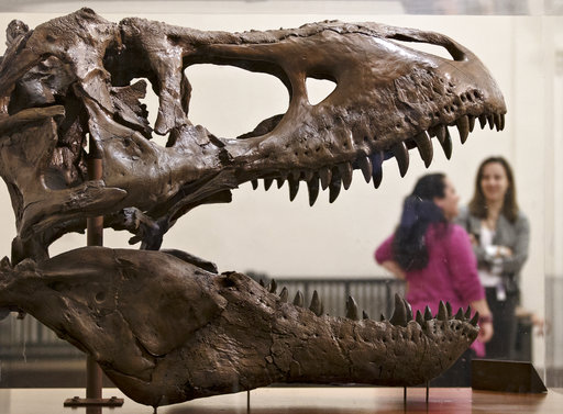 In this April 15, 2014 file photo, a cast of a Tyrannosaurus rex discovered in Montana greets visitors as they enter the Smithsonian Museum of Natural History in Washington. Tyrannosaurus Rex and his buddies are on the move as a new study proposes a massive shake up of the dinosaur family tree. A new study that looks at more than 450 characteristics of 75 dinosaur species proposes a different evolutionary history of dinosaurs, moves the theropods such as T. Rex to a new branch of the family tree and even suggests a bit earlier and more northerly origins for dinosaurs. (AP Photo/J. Scott Applewhite, File)