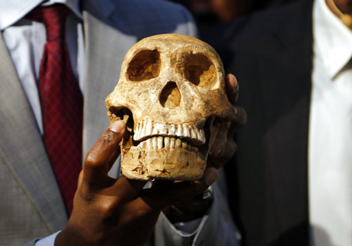 A replica skull of a species belonging to the human family tree whose remnants were first discovered in a South African cave in 2013 is held at the unveiling at the Maropeng Museum, near Magaliesburg, South Africa, Tuesday, May 9, 2017. The species lived several hundred thousand years ago, indicating the creature was alive at the same time as the first humans in Africa, scientists said Tuesday. (AP Photo/Denis Farrell)